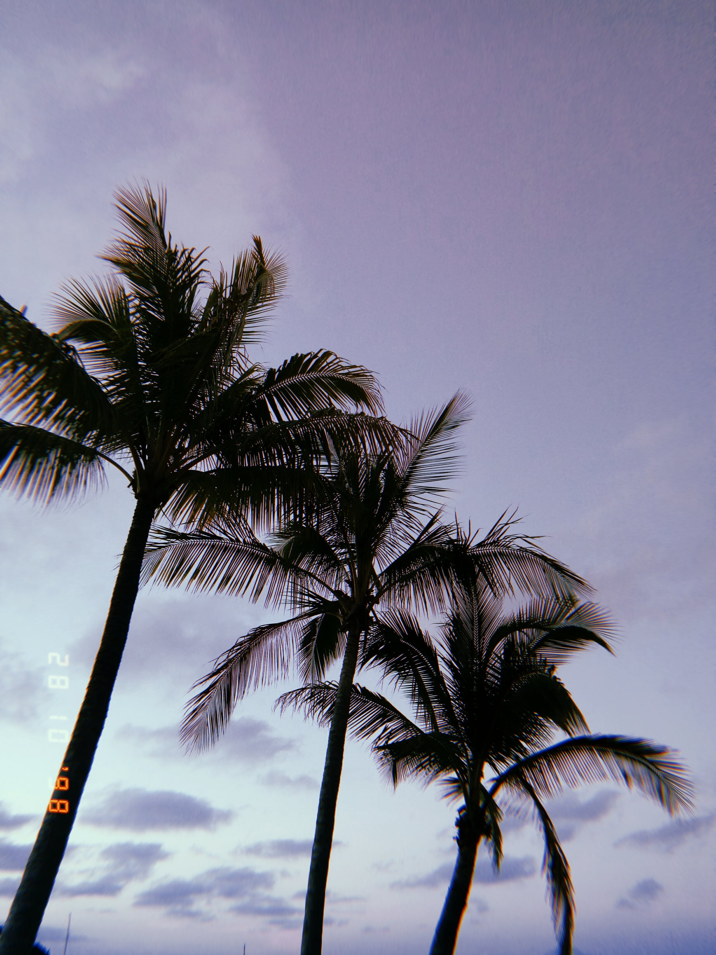 Free stock photo of blue sky, clouds, palm trees, palms