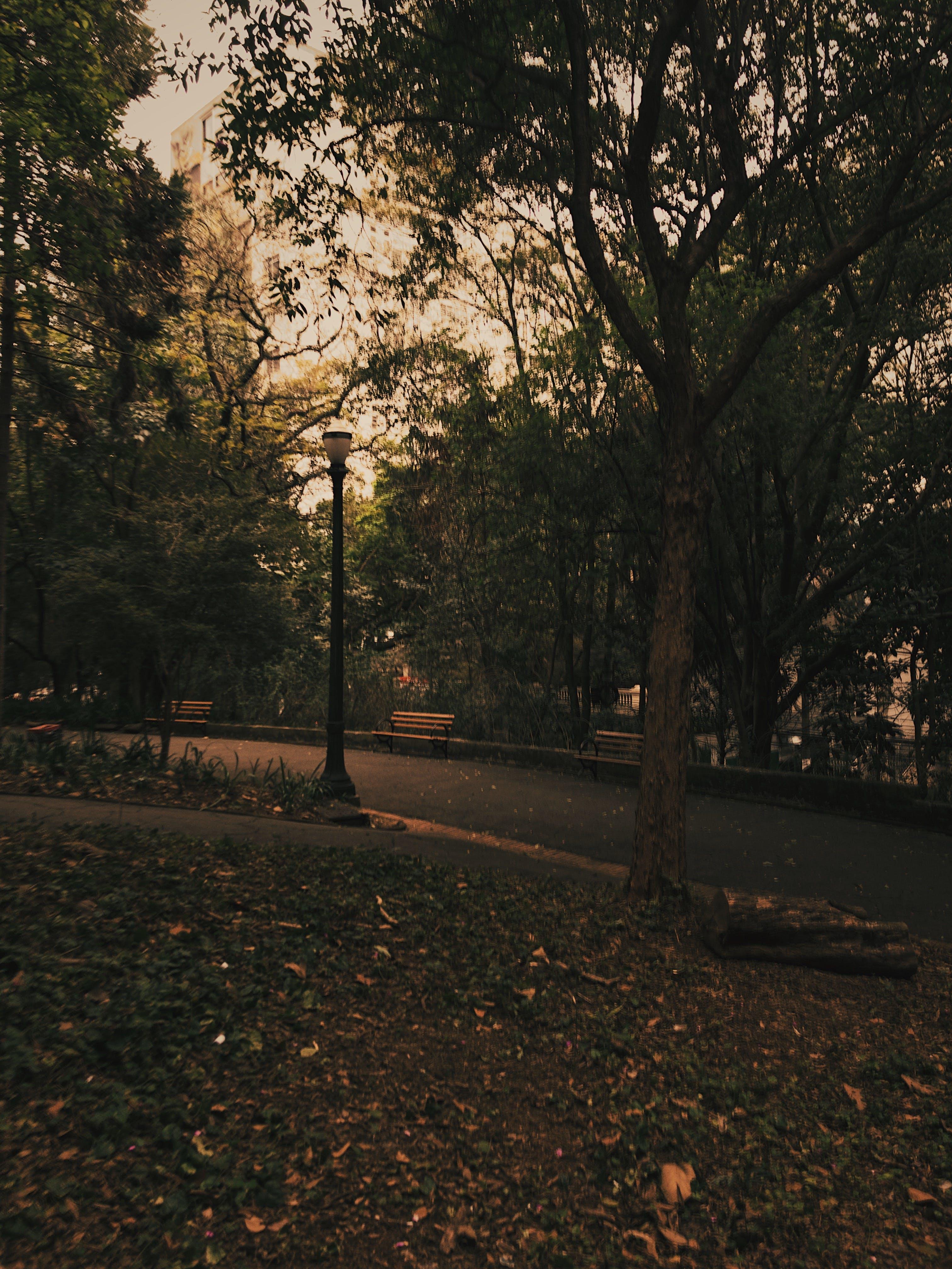パーク, ベンチ, 地面, 木の無料の写真素材