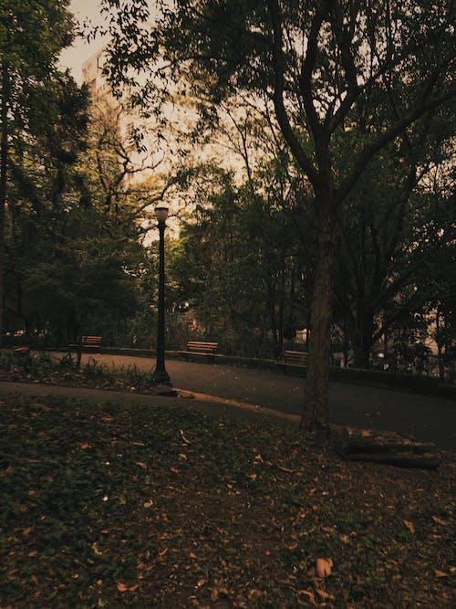 Kostnadsfri bild av bänkar, fallna löv, gata, gräs