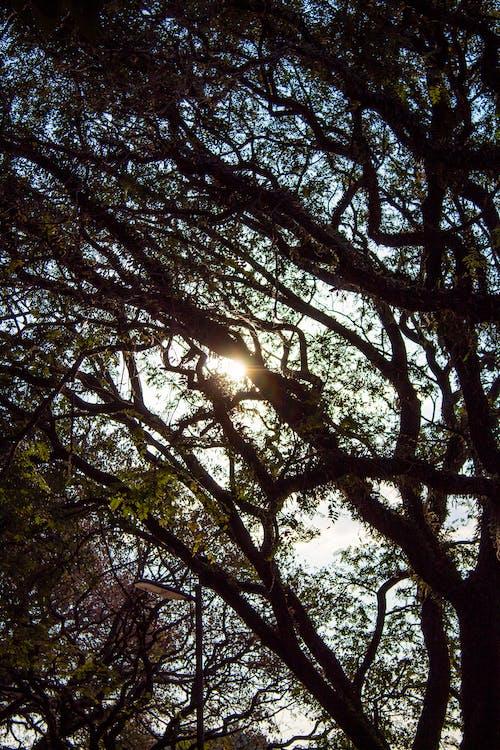 Безкоштовне стокове фото на тему «гілки, дерево, золоте сонце, ліс»