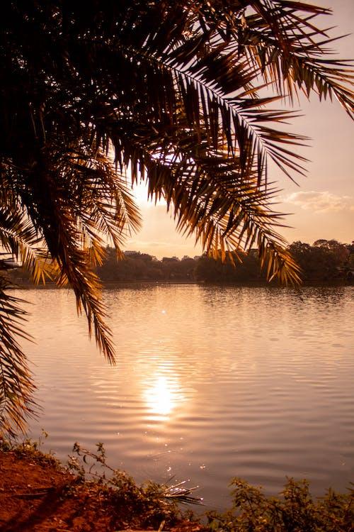 Immagine gratuita di acqua, alberi, cielo, foglie di palma