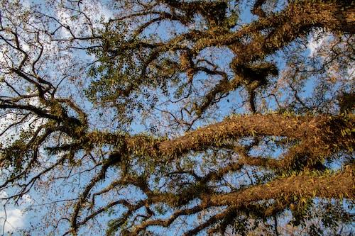 Безкоштовне стокове фото на тему «дерево, ліс, парк, рай»