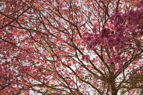 Безкоштовне стокове фото на тему «букет, дерево, Квітковий, квітуче дерево»