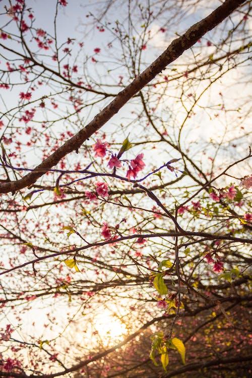Безкоштовне стокове фото на тему «букет, вечірнє сонце, дерево, Квітковий»