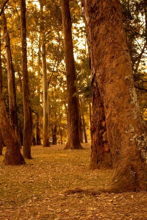 Бесплатное стоковое фото с бревно, ветви, дерево, золотое солнце