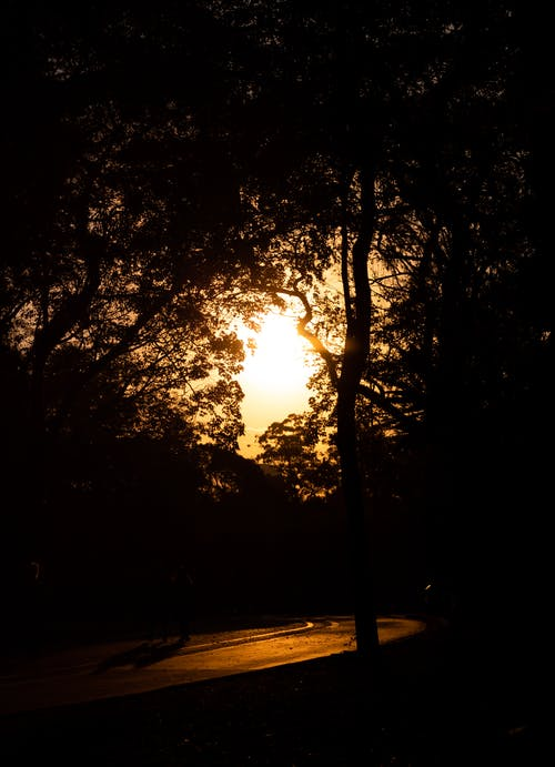 Бесплатное стоковое фото с бревно, ветви, вечернее солнце, дерево