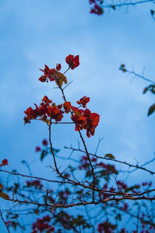 Бесплатное стоковое фото с вечернее солнце, дерево, обнажение породы, отблеск солнца