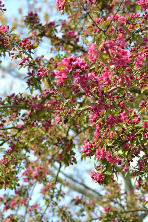 Free stock photo of bloom, blossoms, flowering plant