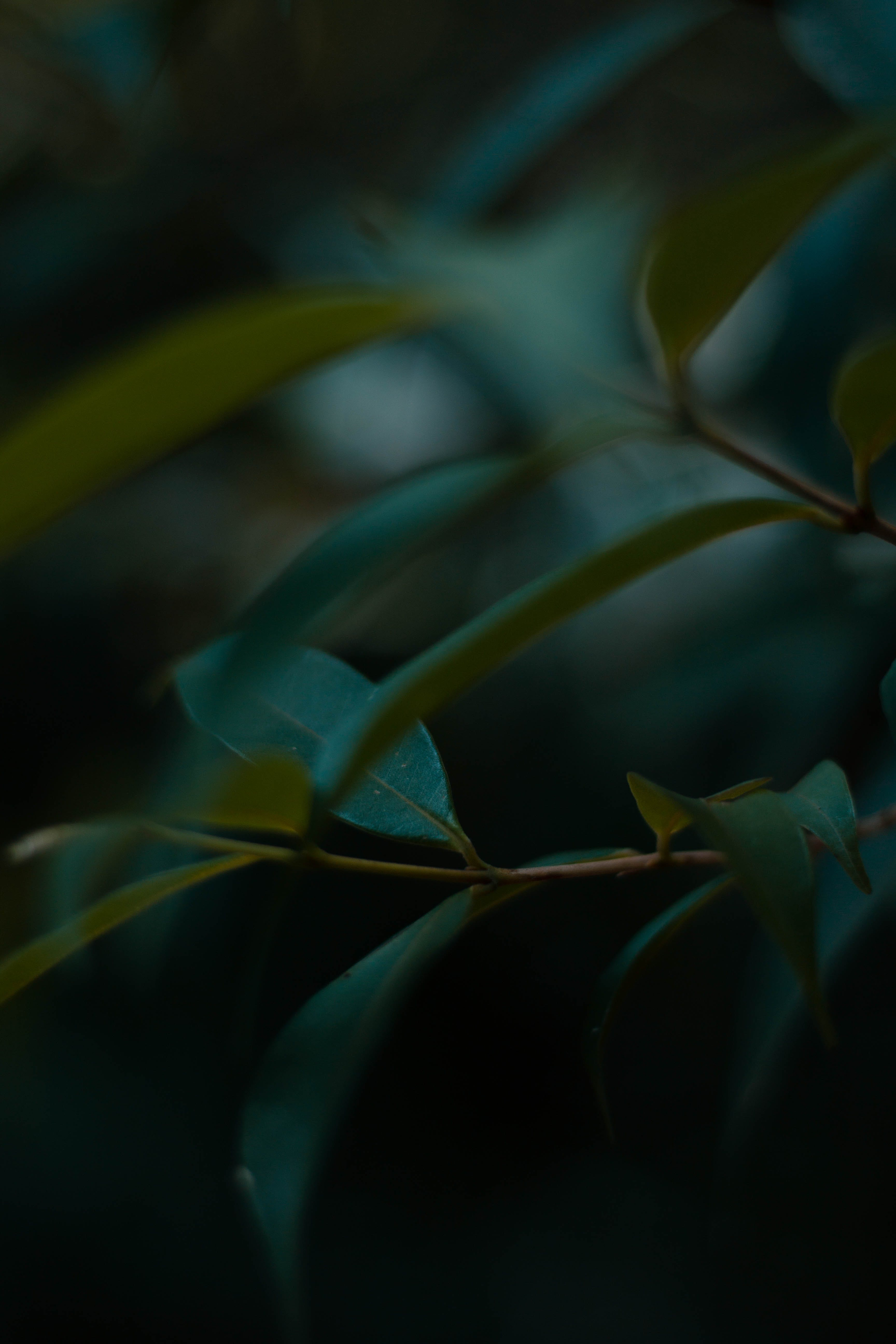 Free stock photo of green leaf, nature photography