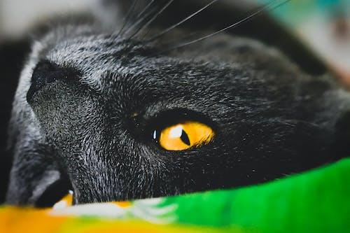 Бесплатное стоковое фото с глаз, глаз кошки, желтый, кошка