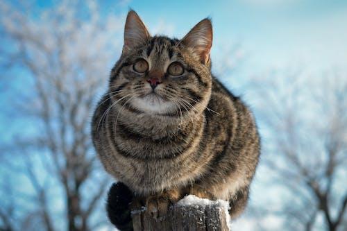 Бесплатное стоковое фото с зима, кошка, красивые животные, милый