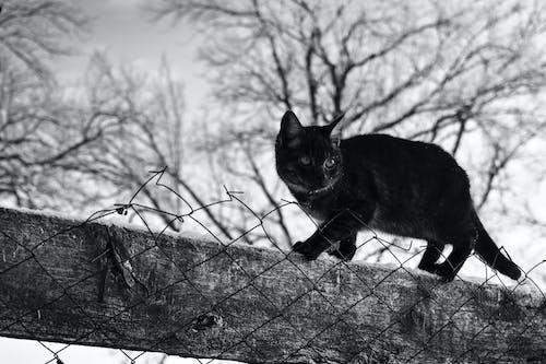 Бесплатное стоковое фото с деревья, забор, кошка, небо