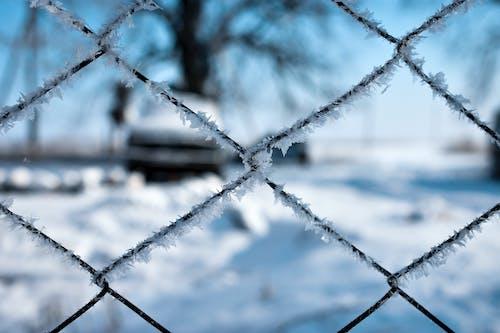 Бесплатное стоковое фото с голубое небо, деревья, зима, небо