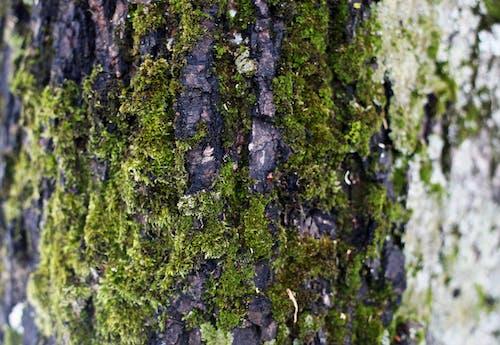 Бесплатное стоковое фото с дерево, Кора, мох, парк