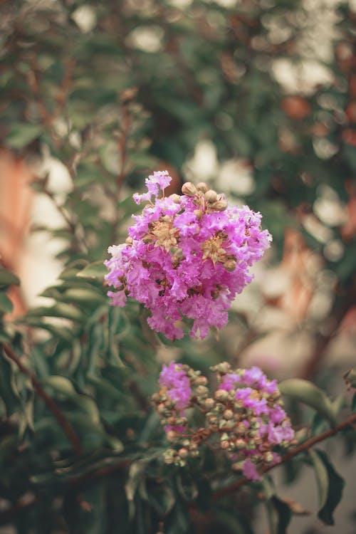 樹枝, 環境, 粉紅色的花, 紫色小花 的 免费素材照片