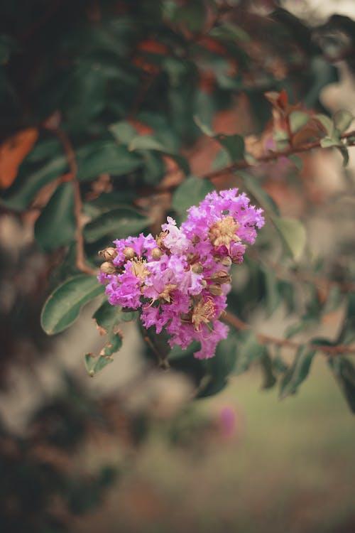 Kostnadsfri bild av blomknopp, blomma, blommig, blomstrande flora