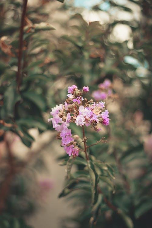 Foto stok gratis berkembang, bunga, bunga merah jambu, bunga ungu