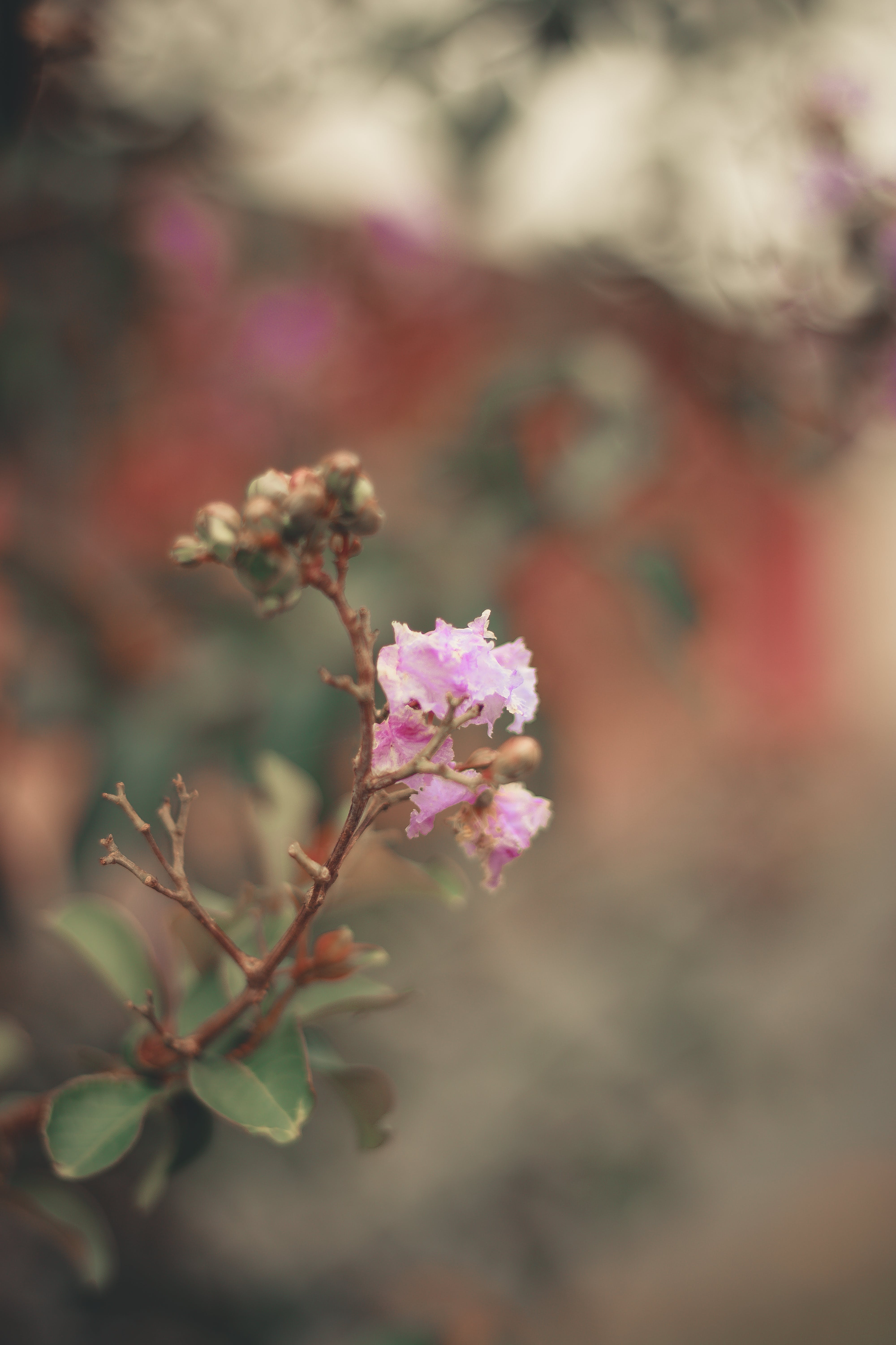 Free stock photo of bloom, blooms, blossom flora, bough