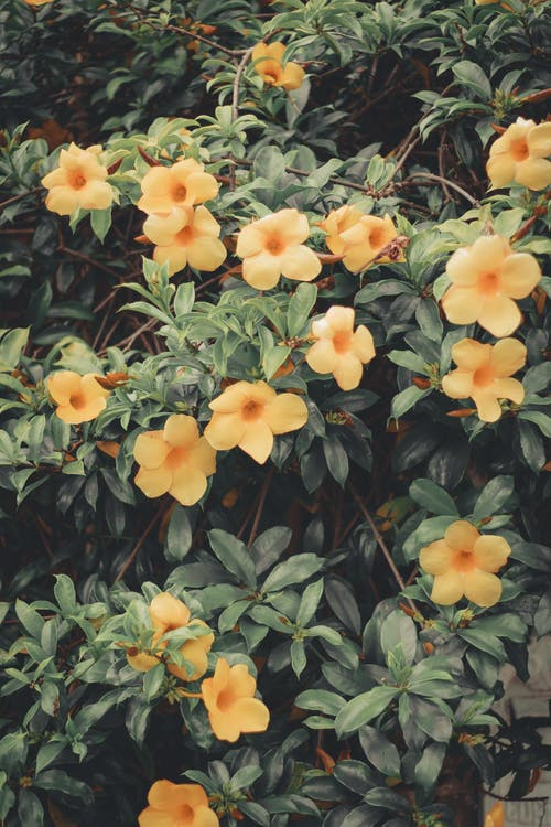 Kostnadsfri bild av apelsinblomma, blomknopp, blomma, blommig