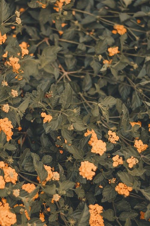 橘色的花, 環境, 綻放, 自然攝影 的 免费素材照片