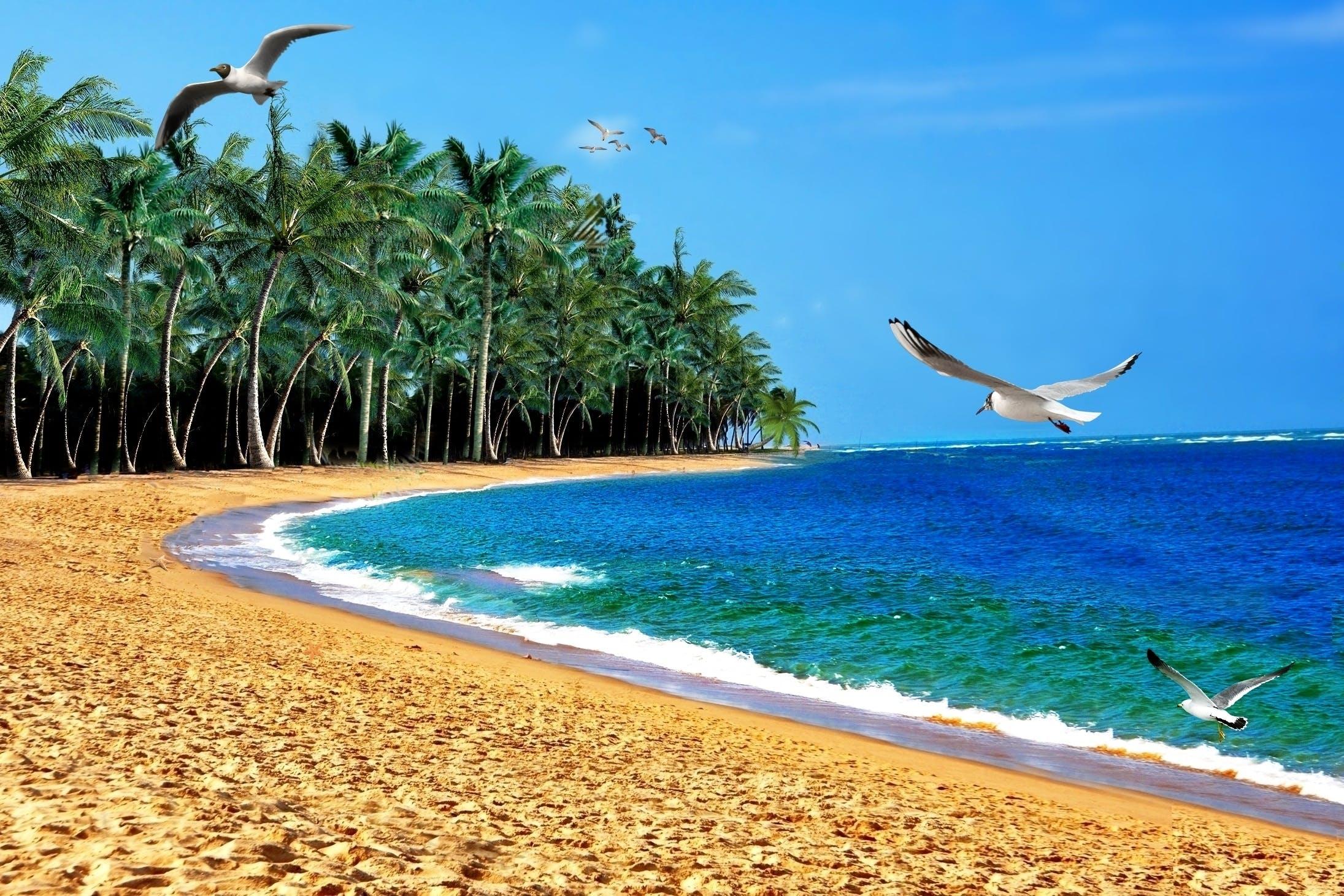 areia, ave, coqueiros