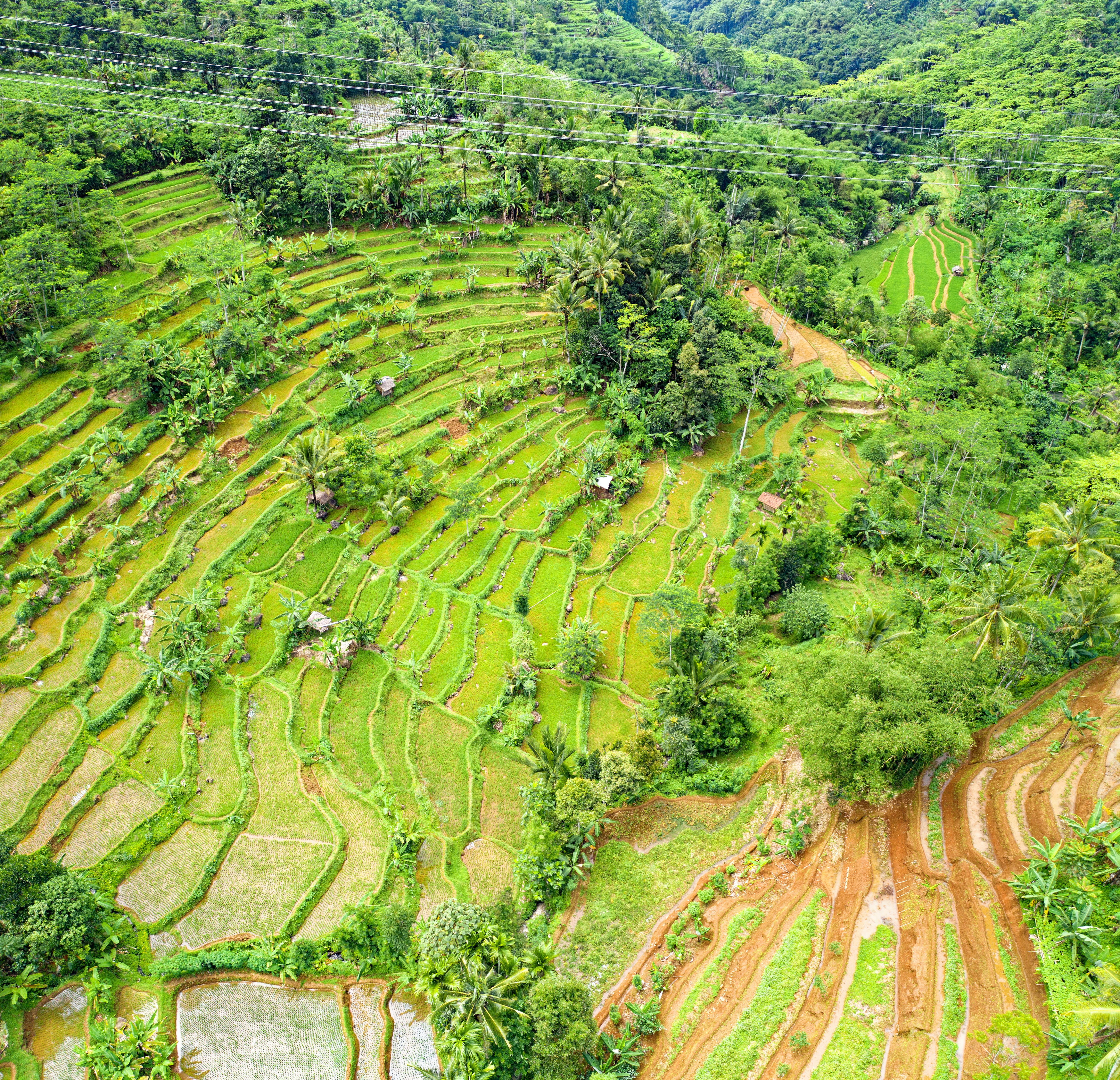 Birds Eye View of Rice Field