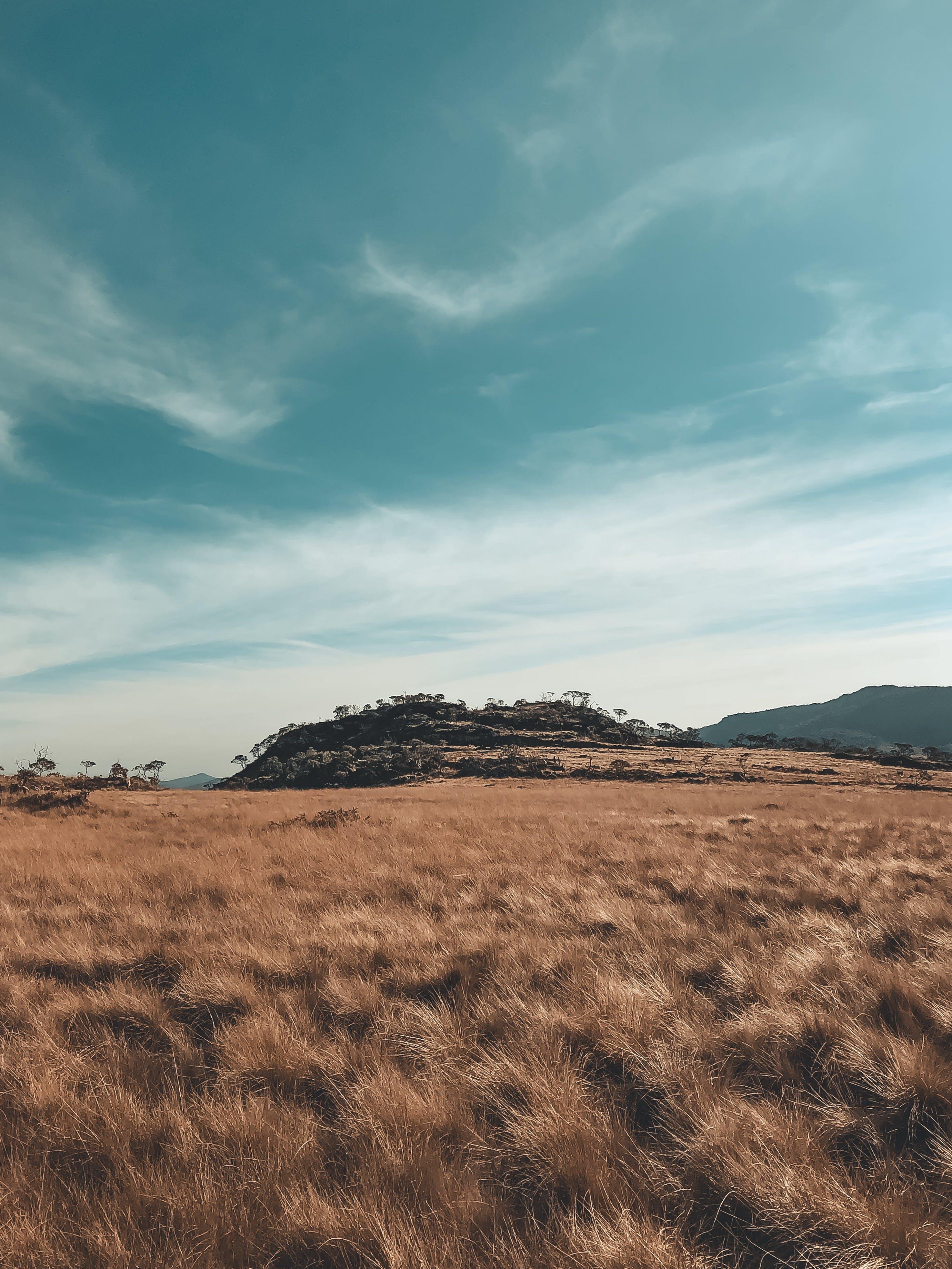 คลังภาพถ่ายฟรี ของ ท้องฟ้า, ธรรมชาติ, พื้นที่เกษตร, พื้นที่เพาะปลูก