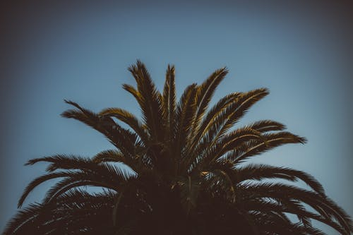 Безкоштовне стокове фото на тему «блакитне небо, Денне світло, денний час, дерево»