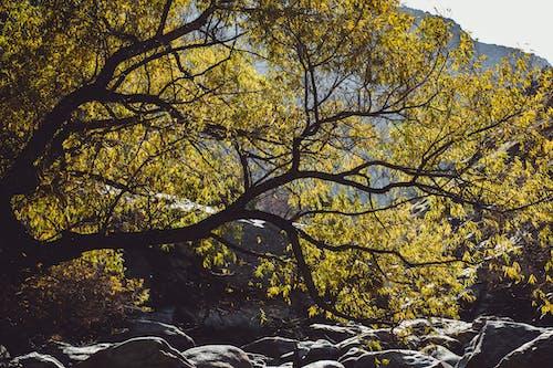 天性, 樹 的 免费素材照片