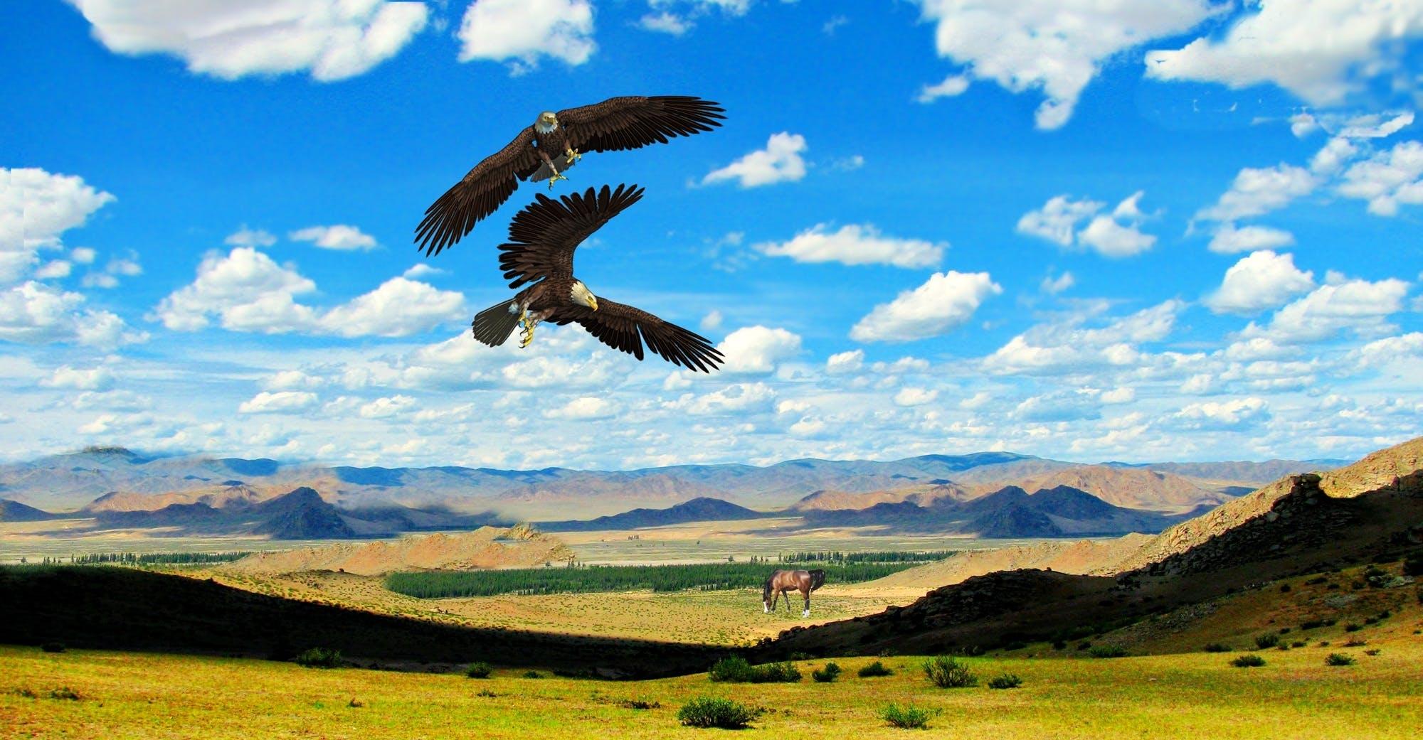 aves, águias, cavalo