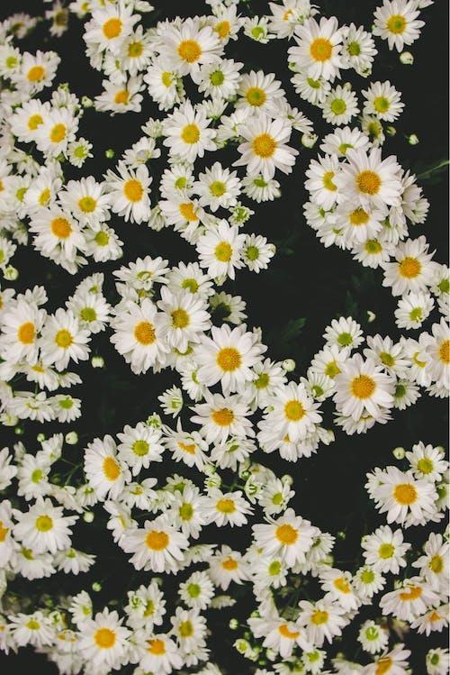Darmowe zdjęcie z galerii z biały, piękne kwiaty, piękny kwiat, tapeta z kwiatami