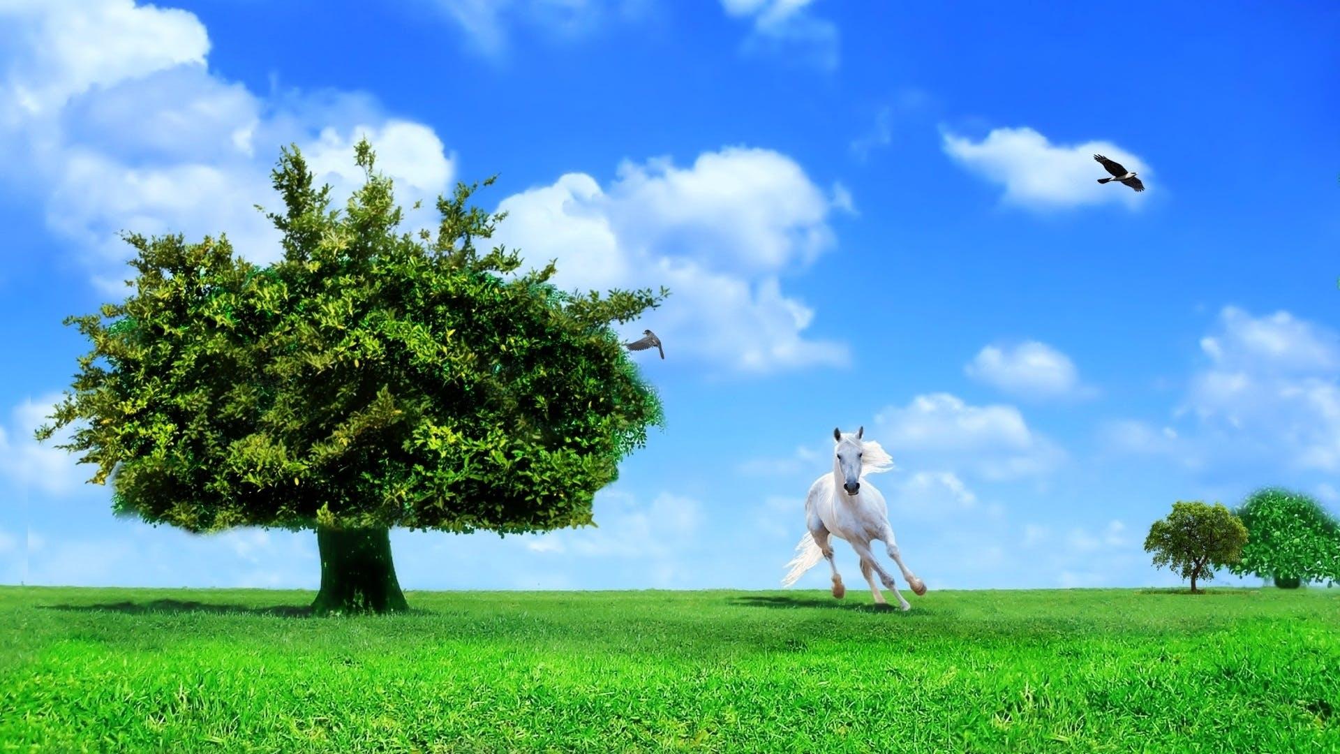 ave, árvore, campo