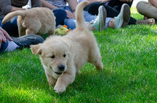 Free stock photo of dogs, puppies