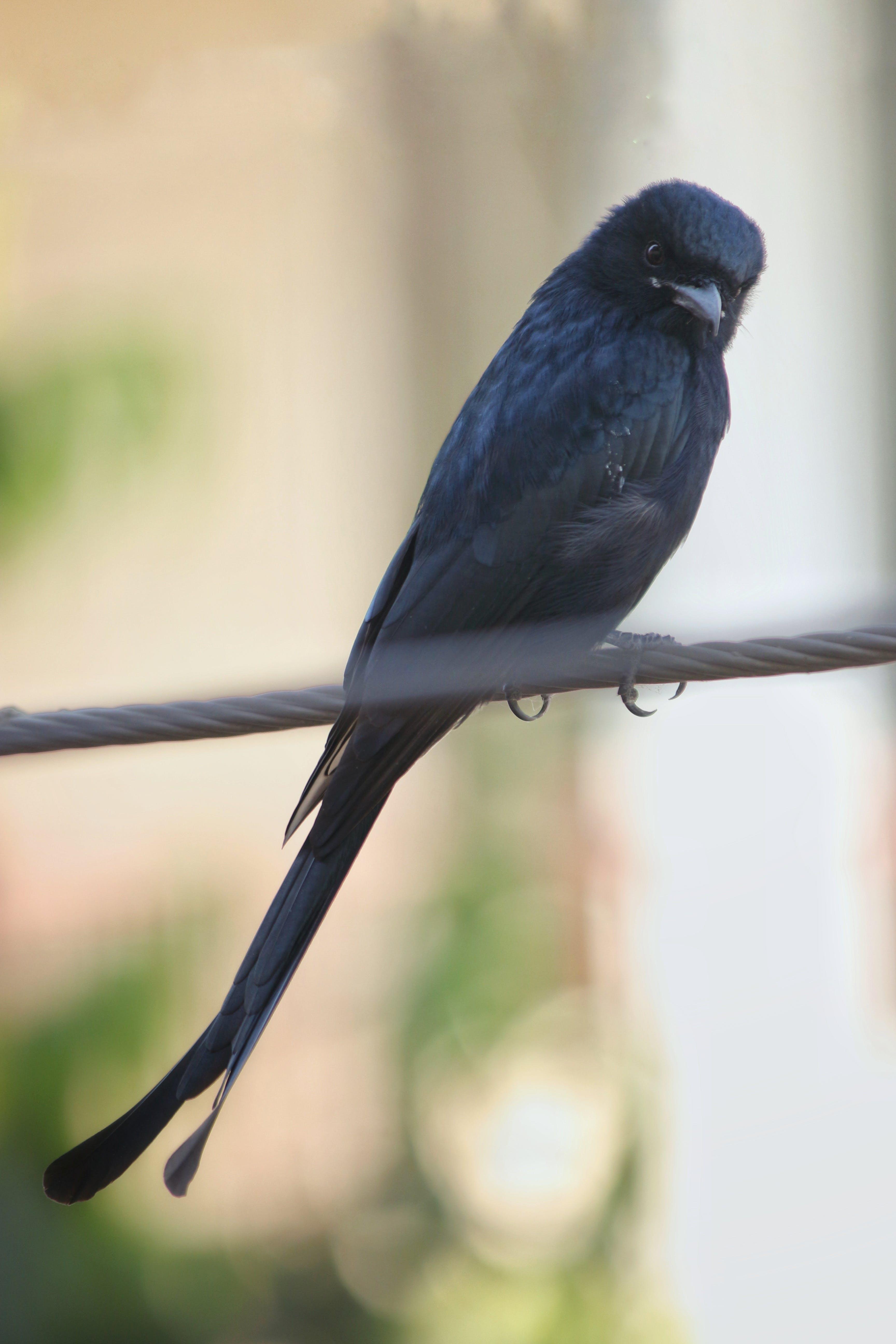 Foto d'estoc gratuïta de #angrybirds #birds #bird #angry #canon #photograph, #birds #nature #bird #photography #birdsofinstagra