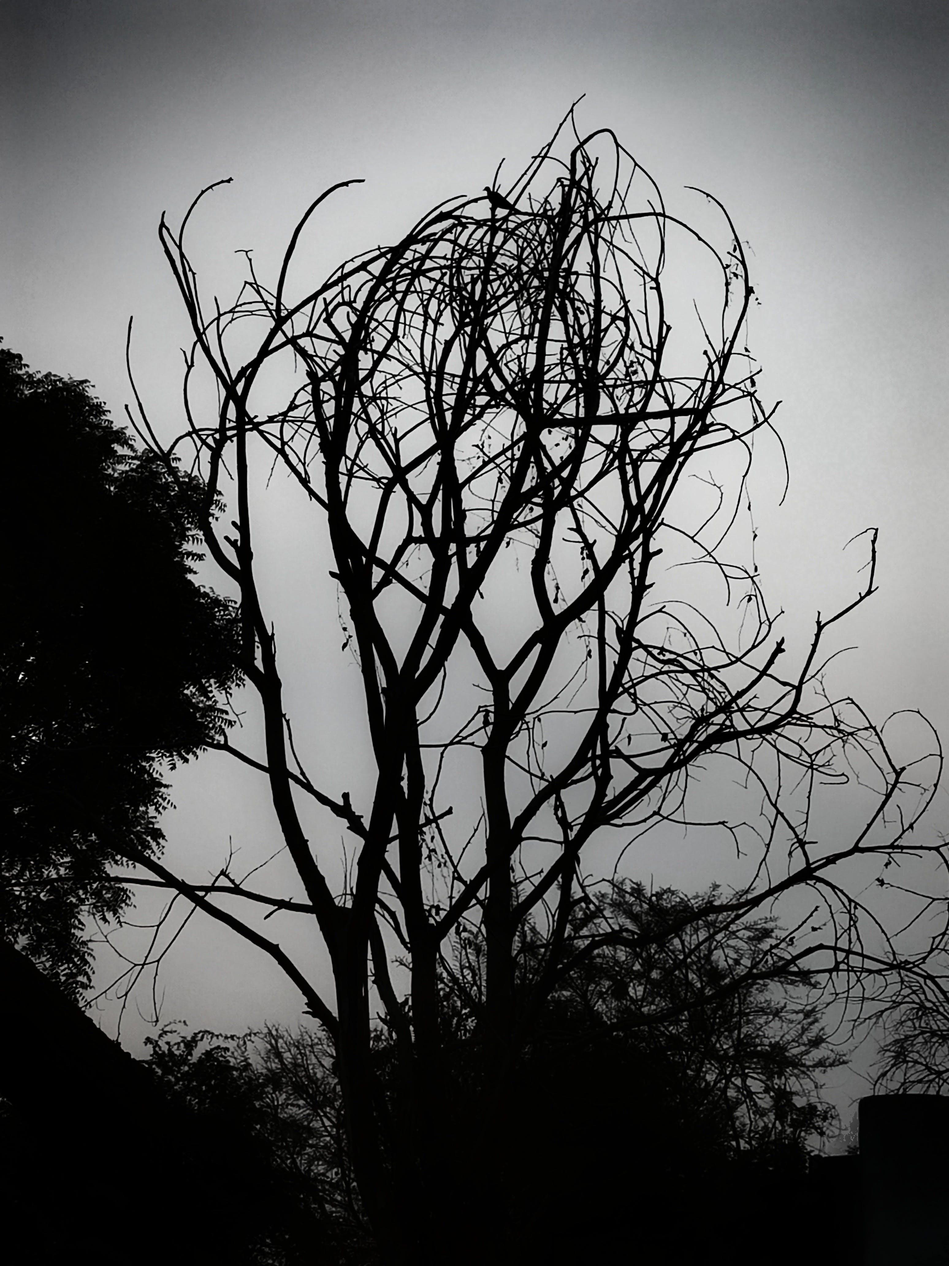 Foto d'estoc gratuïta de #autumn #nature #photography #sky #photooftheday #, #deadtree #nature #tree #photography #trees #sky #