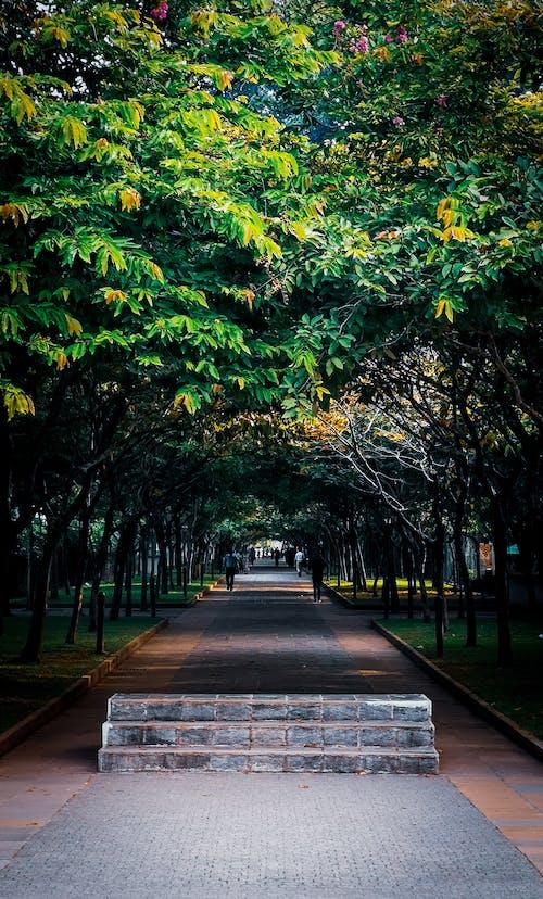 Δωρεάν στοκ φωτογραφιών με δέντρα, όμορφος, πράσινος, σήραγγα