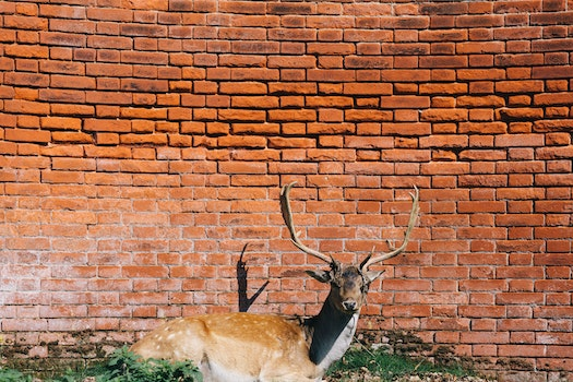 Free stock photo of red, bricks, wall, animal