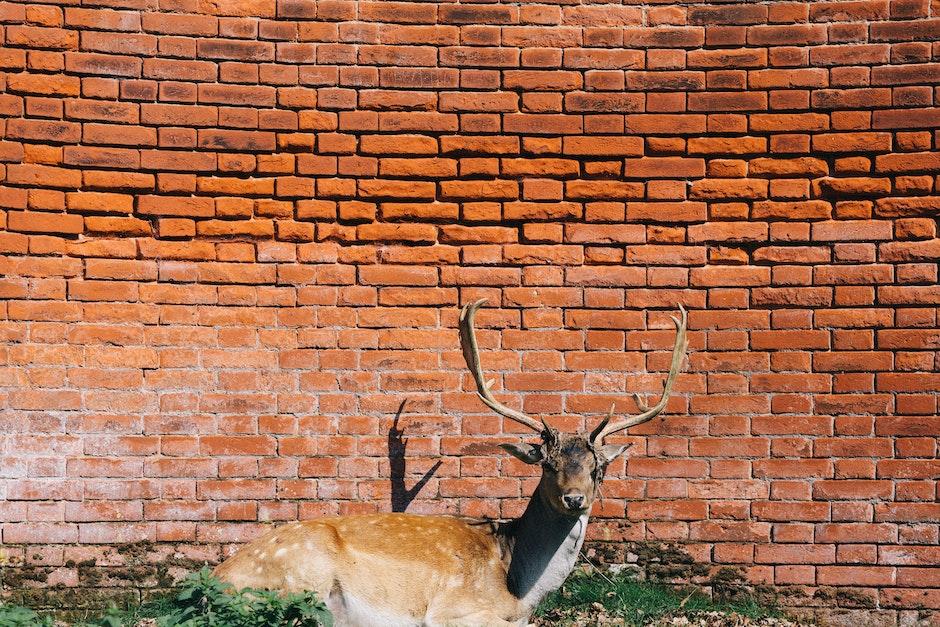 animal, antlers, bricks