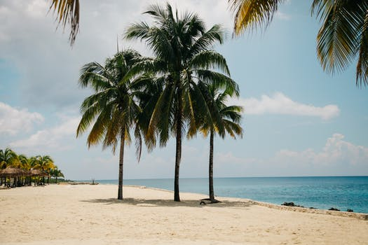 Coconut Tree On The Beach During Daytime