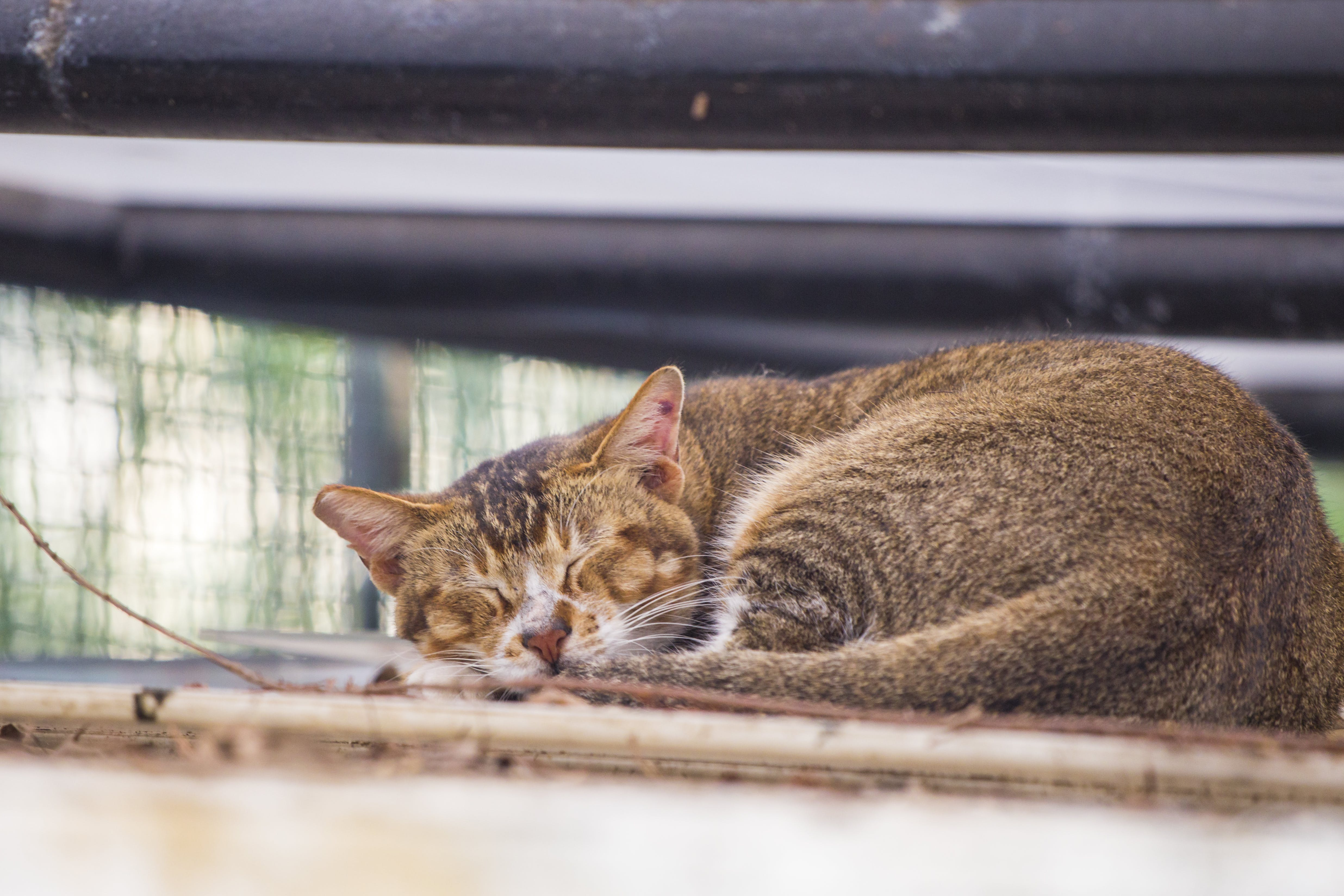 Free stock photo of afternoon, animal, cat, hong kong