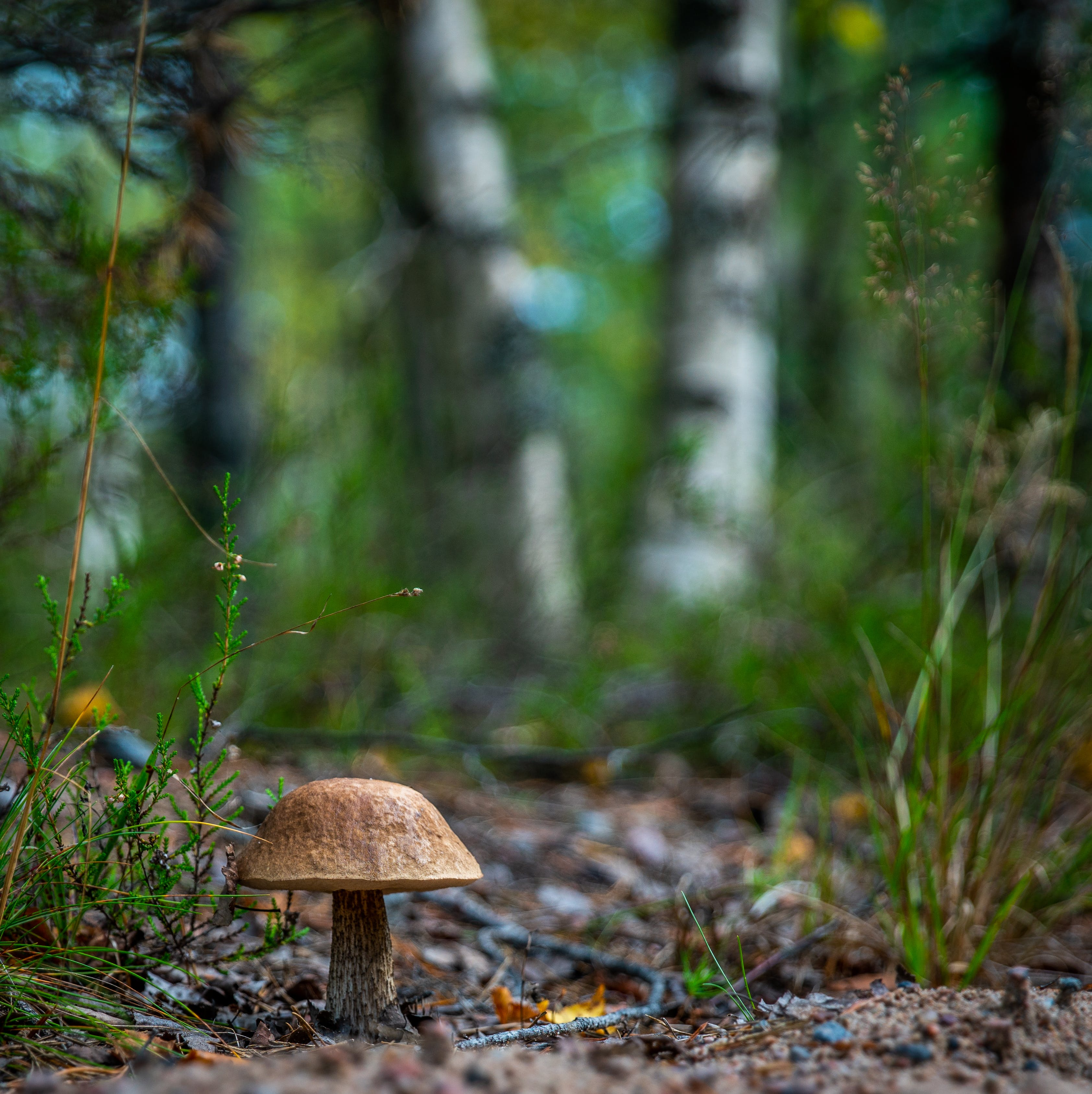 Selective Focus Photography of Brown Mushroom
