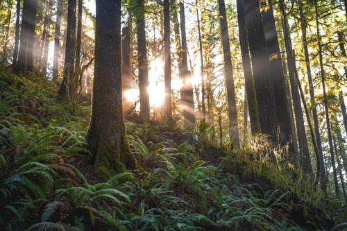 Scenic Photo of Forest With Sunlight