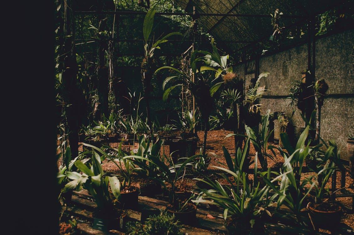 activități agricole, agricultură, botanic