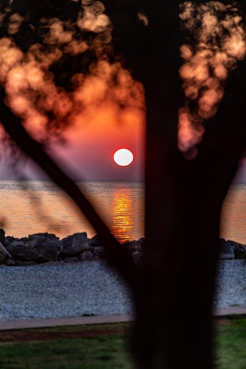 Imagine de stoc gratuită din apus, apus de soare b, copac shiluet