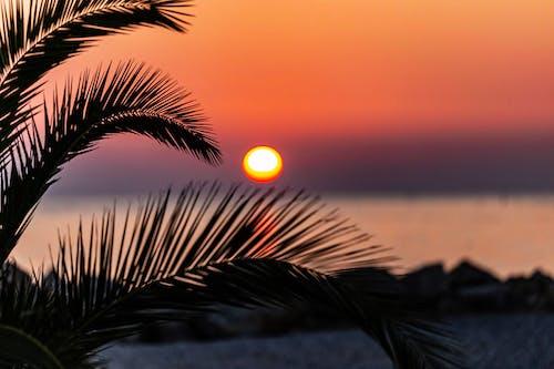 Imagine de stoc gratuită din apus, mare apus de soare, palmă shiluet, plaja de soare