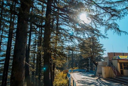 Foto stok gratis bukit, gunung, matahari, pohon
