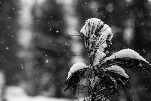 Foto d'estoc gratuïta de arbres, arbres blancs, blanc com la neu, bosc