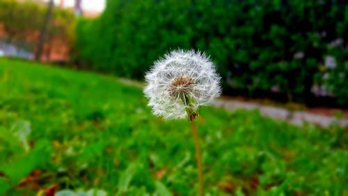Free stock photo of flower, grass