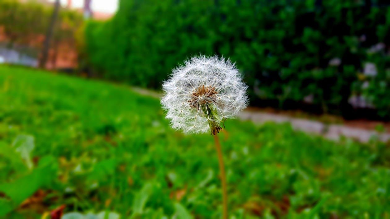 çiçek, çim, çimen