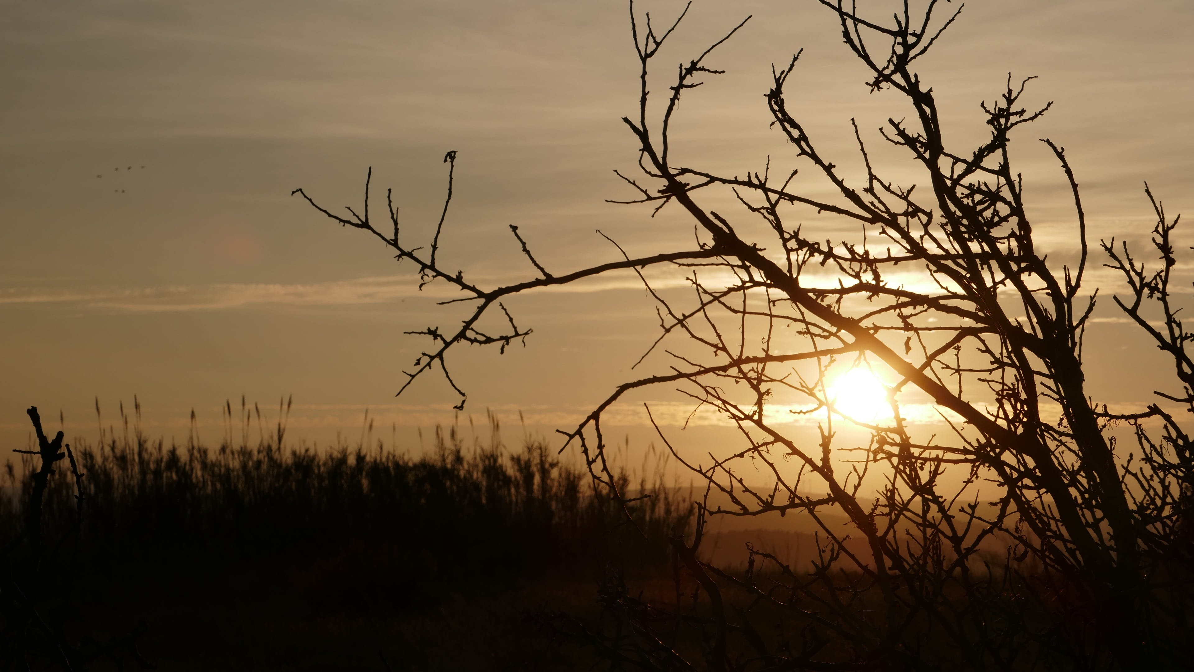 Free stock photo of golden hints behind tree branches, sunset in untouched nature